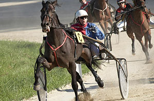 About Harness Racing: the Farrier